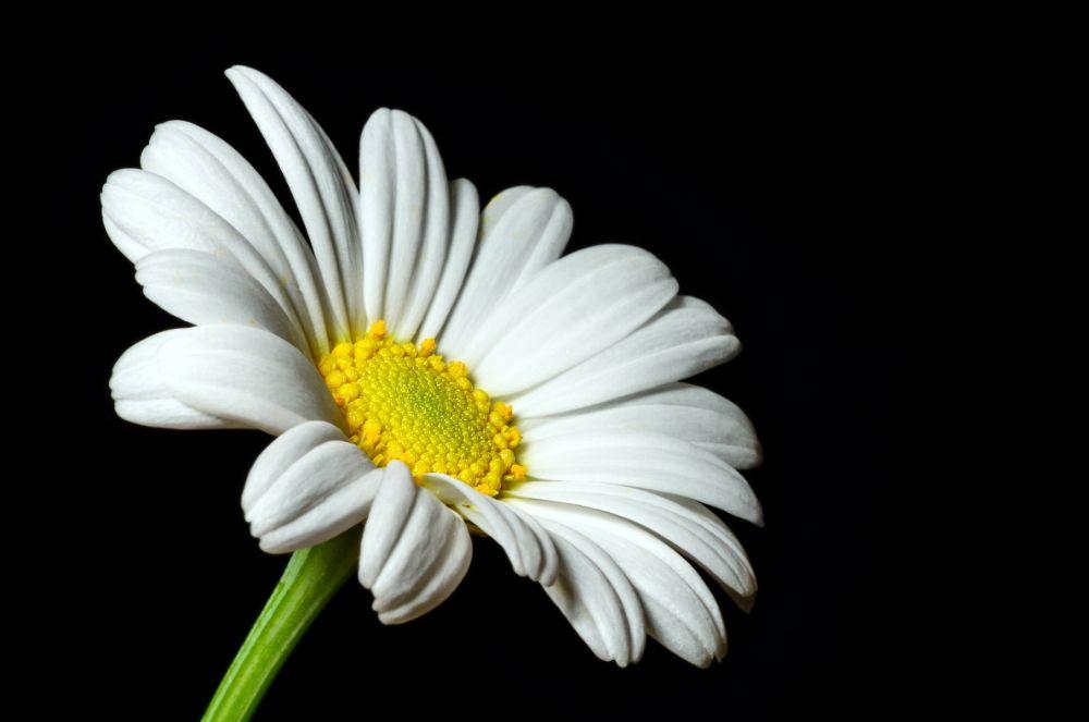 Photo in Nature #flower #nature #macro
