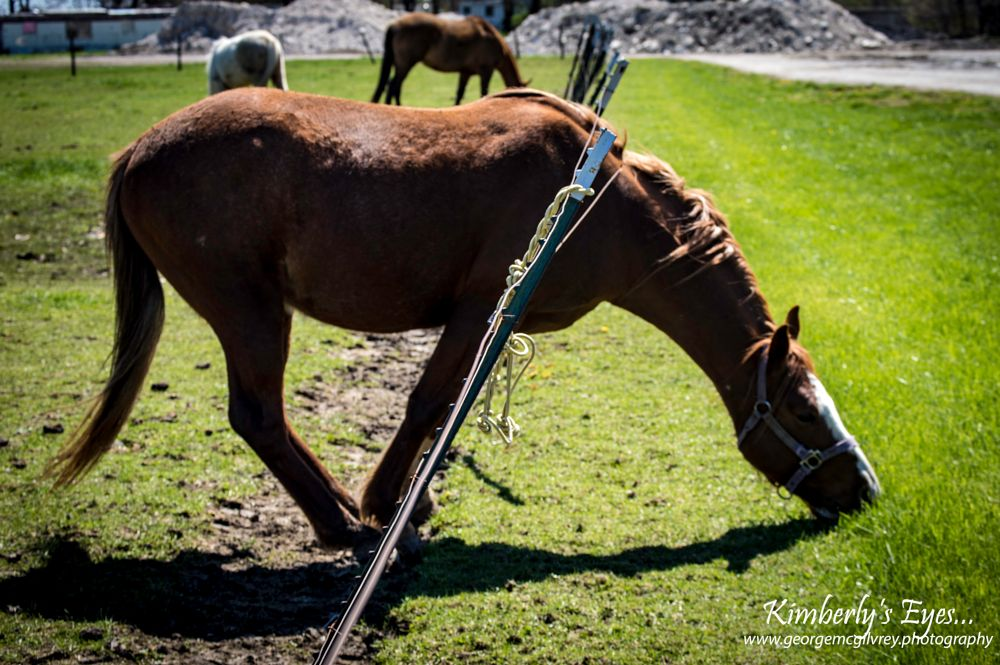 Photo in Animal #horse #grass #fence