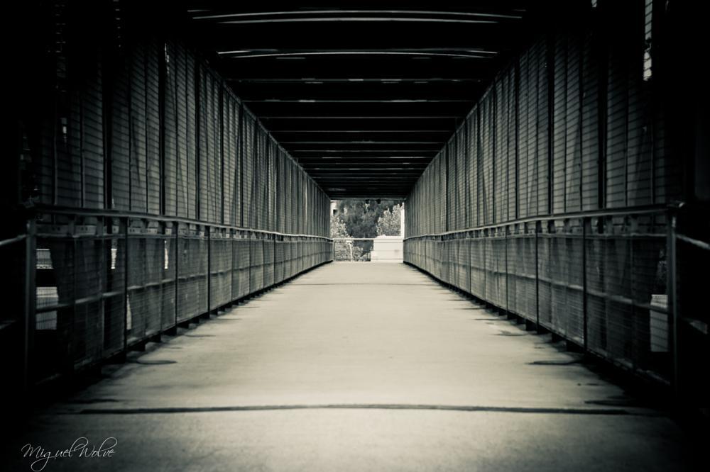 Photo in Black and White #path #way #walk #life #journey #next #step #pathway #walkway #black and white #black #white