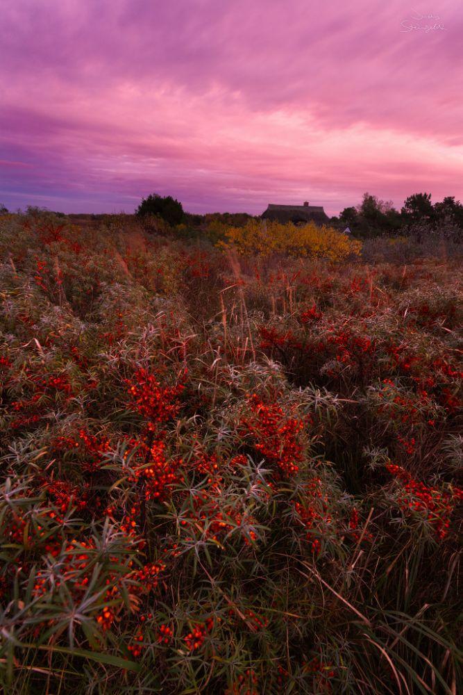 Photo in Landscape #hiddensee #seabuckthorn #sanddorn #yellow #gelb #orange #red #rot #baltic sea #ostsee #deutschland #norddeutschland #germany #northern germany #sea #meer #island #insel #holliday #ferien #sunset #sonnenuntergang #landscape #nature #landschaft #natur #canon #eos #600d #sigma #ultraweitwinkel #ultra wide angle #manfrotto