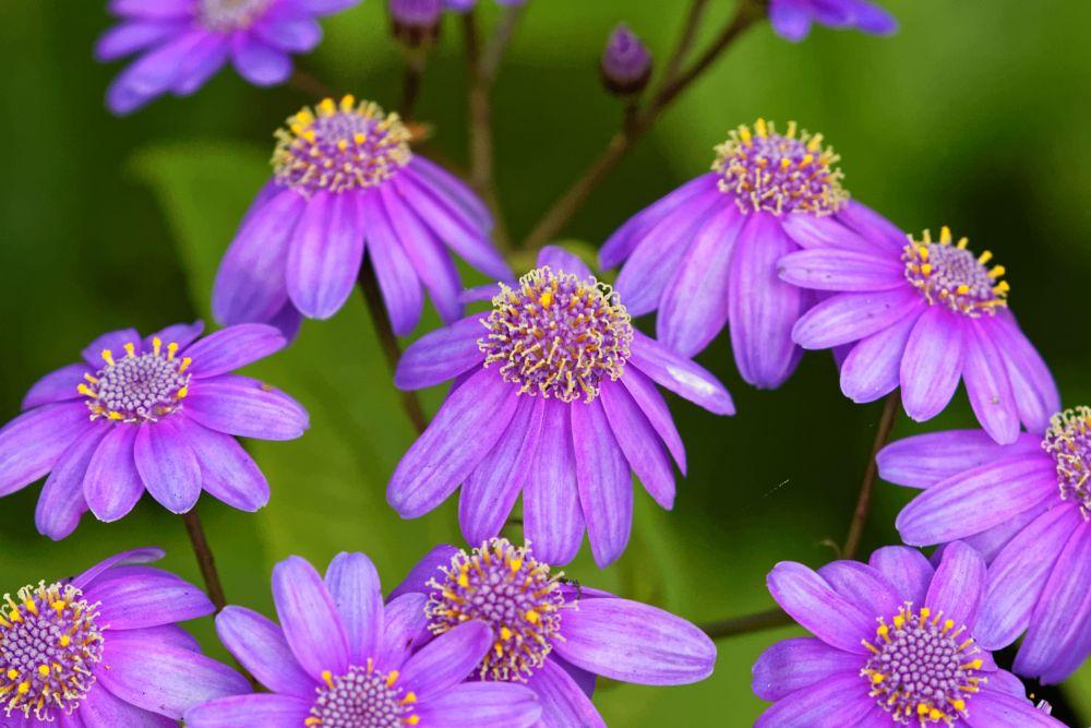 Photo in Nature #daisies #colour #pretty