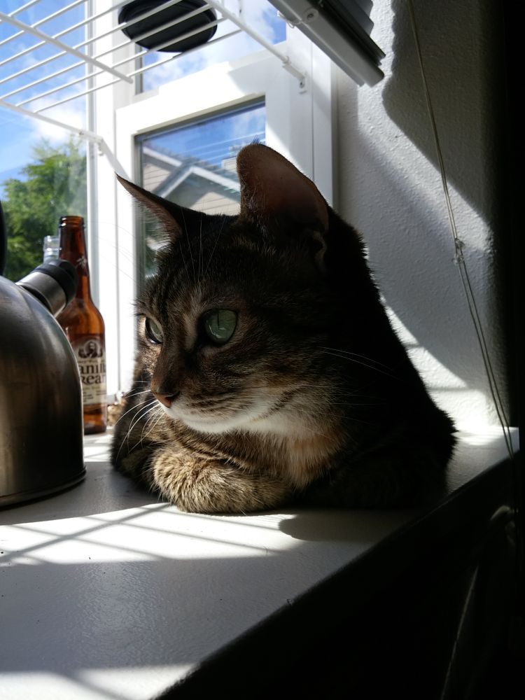 Photo in Random #cat #cats #animals #sunnydays