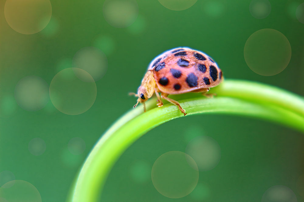 Photo in Macro #macro #bugs #green #lines #through #bubble