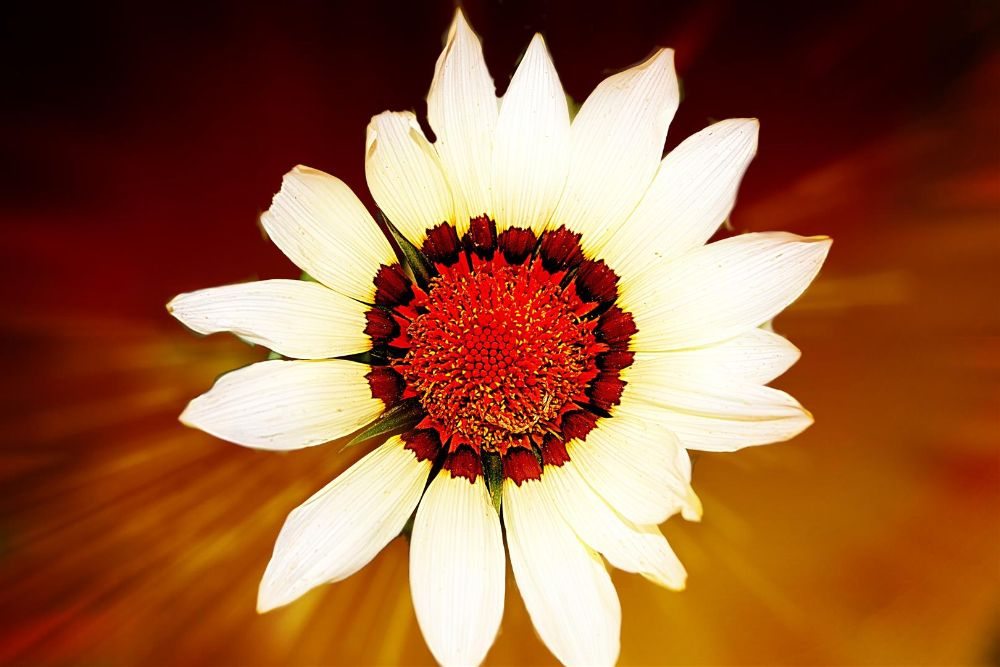 Photo in Nature #flower #petel #leaf #pollen #sun #orange #nature