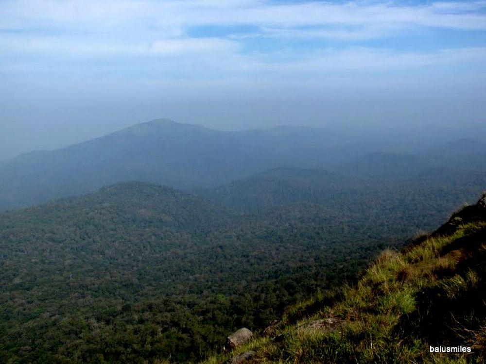 Photo in Random #a view #forest #karnataka #india #green