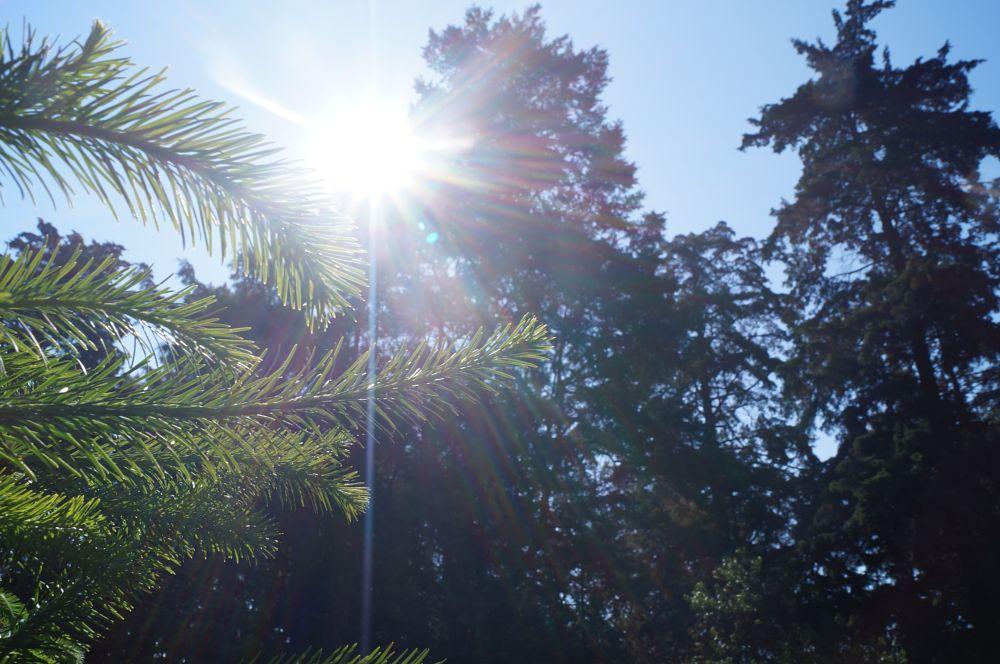 Photo in Nature #dale #los #buenos #dias #al #mundo