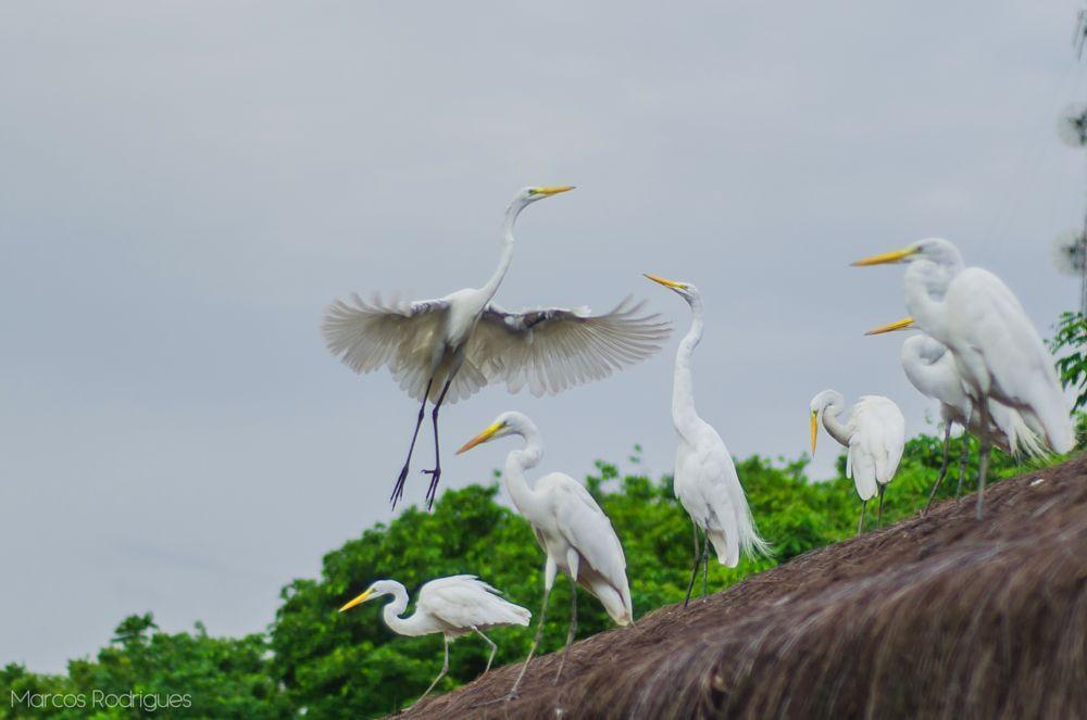 Photo in Animal #herons #group #brazil #nature #colors #birds #nikon #d7000 #50mm