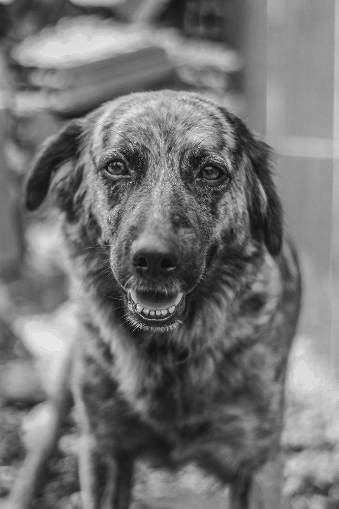 Photo in Black and White #dog #b&w #beautiful