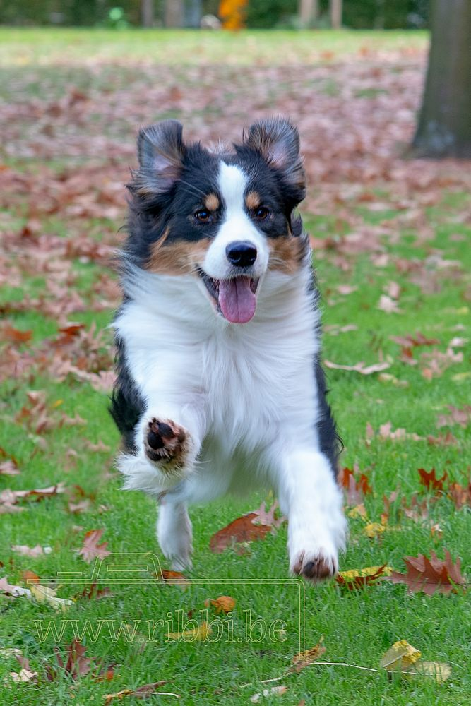 Photo in Animal #dog #outdoor #happy #pup #puppy #running
