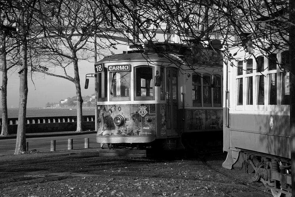Photo in Black and White #tramcar arrábidabridge trees #myfujilove