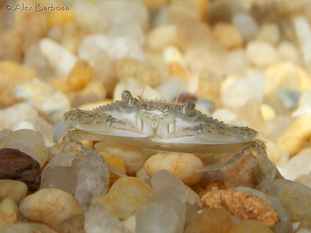 Photo in Animal #crab #geefaa