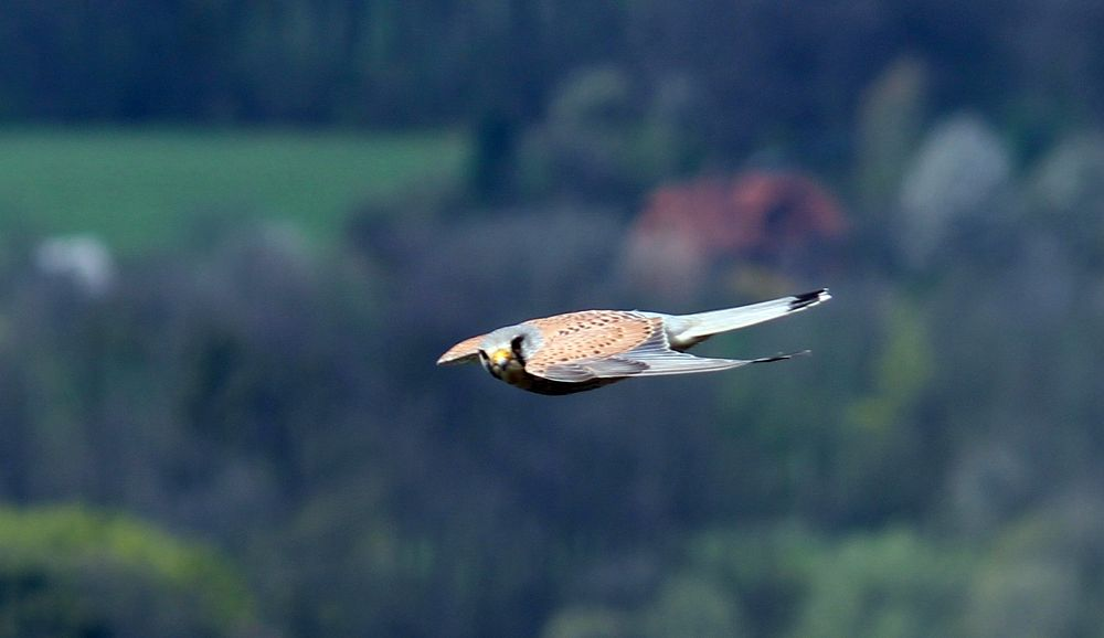 Photo in Animal #dude #bird #stramberk #truba #look