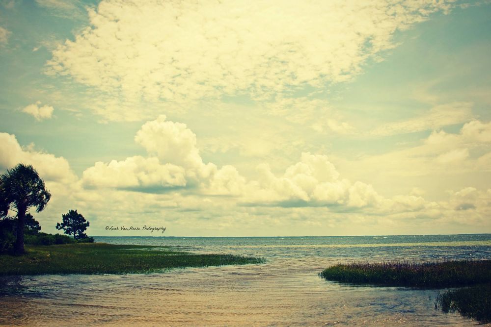 Photo in Landscape #florida #gulf #tropical