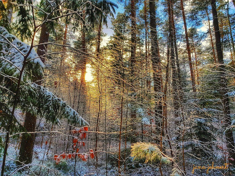 Photo in Nature #nature landscape forest sun