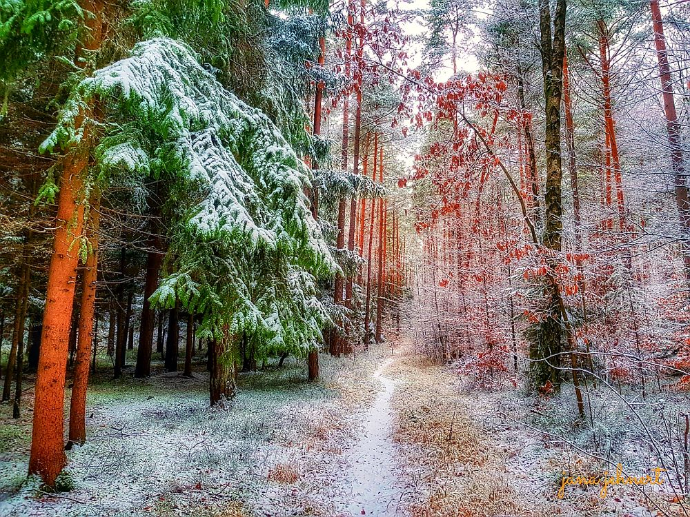 Photo in Nature #nature landscape forest win