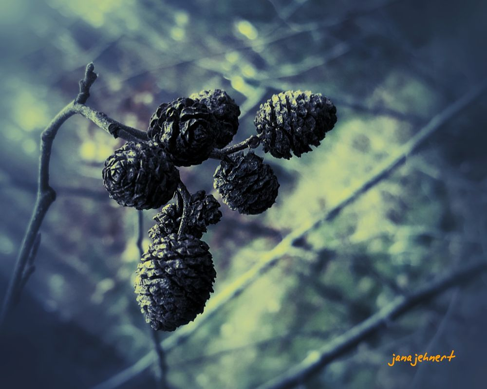 Photo in Random #nature #macro #fruits #of #autumn