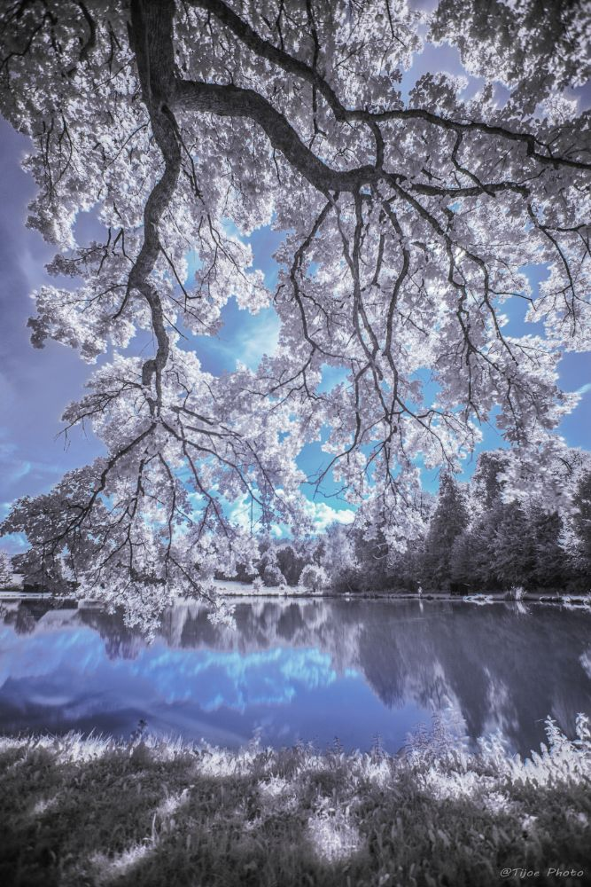 Photo in Landscape #arbre #etang #campagne #ciel #ir