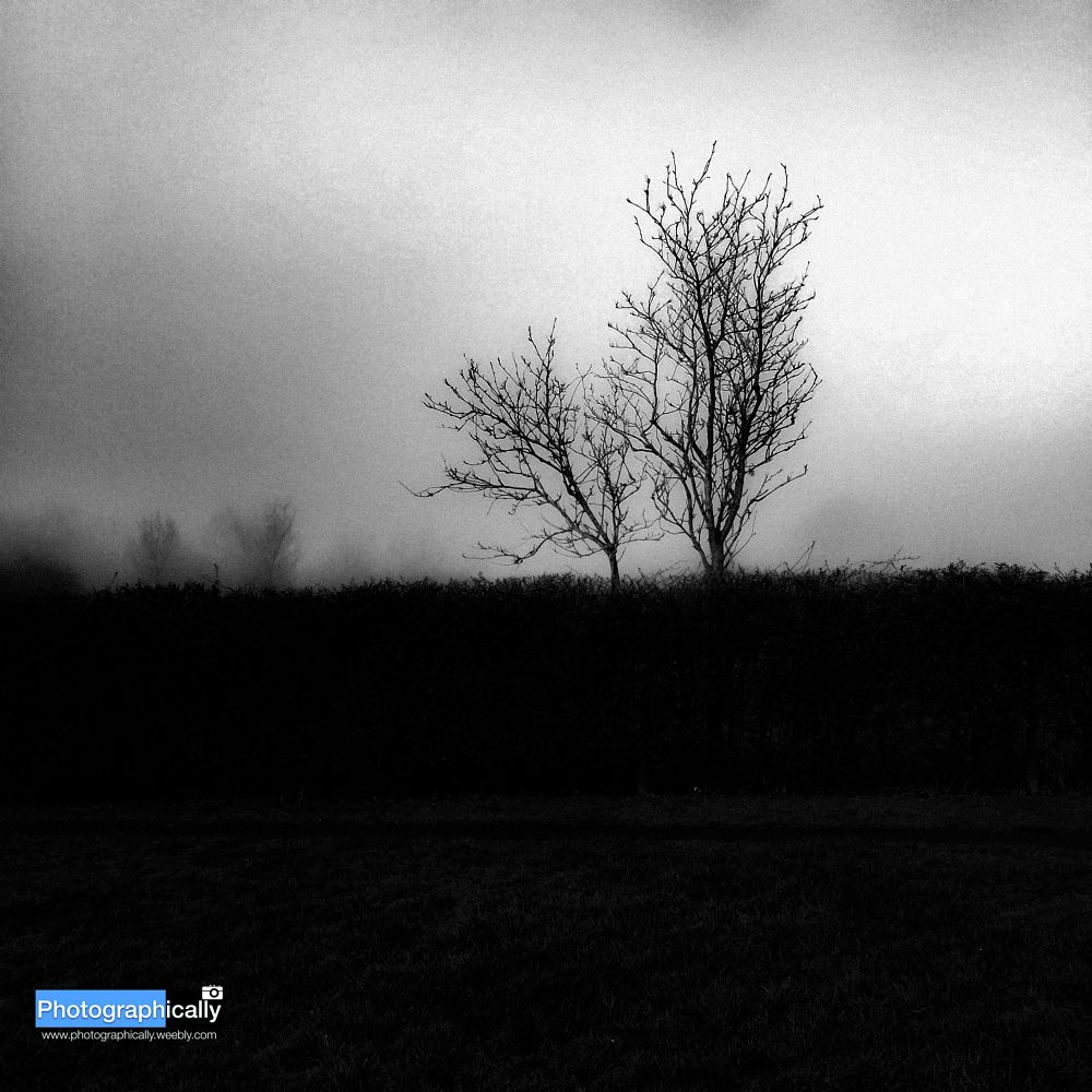 Photo in Black and White #fog #tree #dark #black #white #mono #monochrome #iphone #apple #lightroom #trawden #colne #lancashire #england #uk