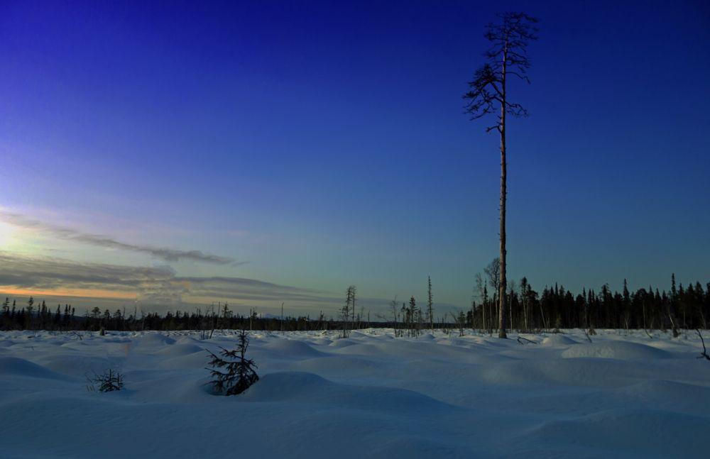 Photo in Landscape #suomi #lappi #finland #lapland