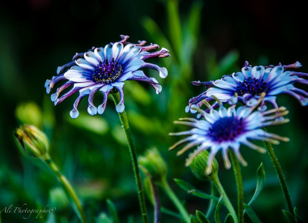Photo in Random #ali saadat photography #brisbane #flower