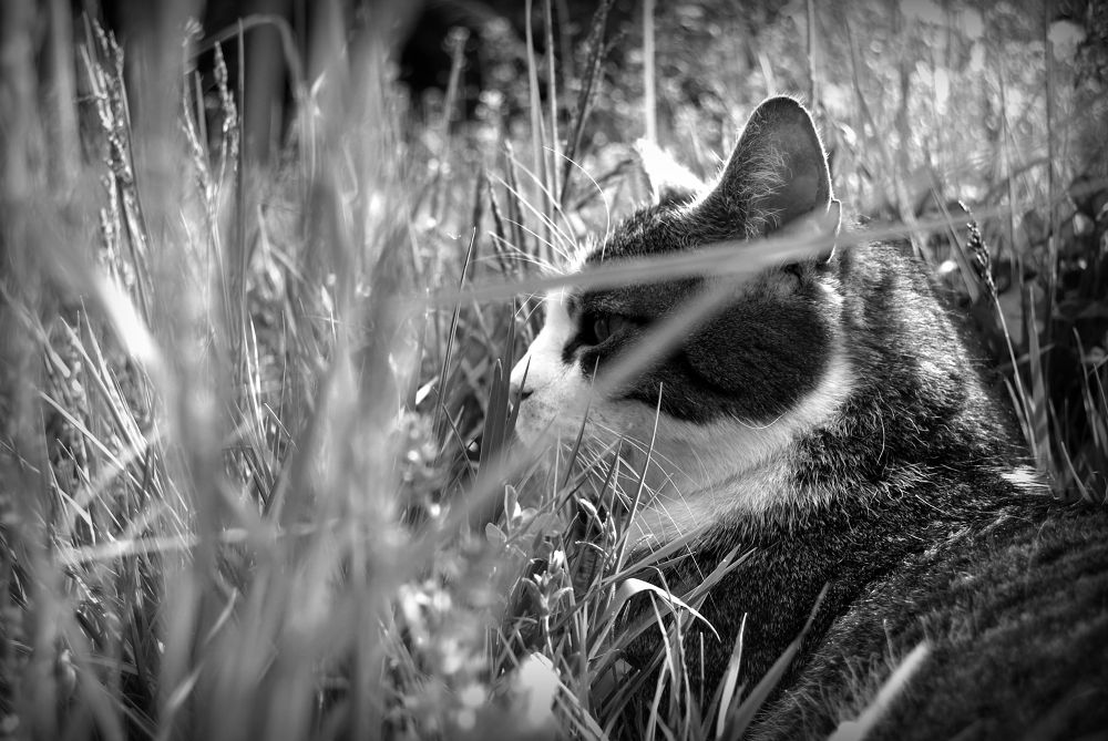 Photo in Animal #b/w #nature