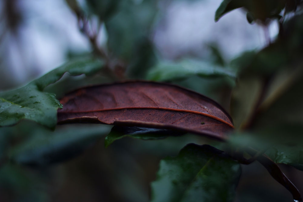 Photo in Nature #leaf #brown #green #dark #shadow #autumn #dead leaf
