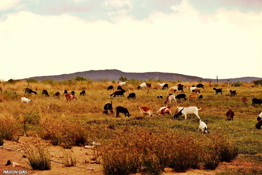 Photo in Random #paisagem