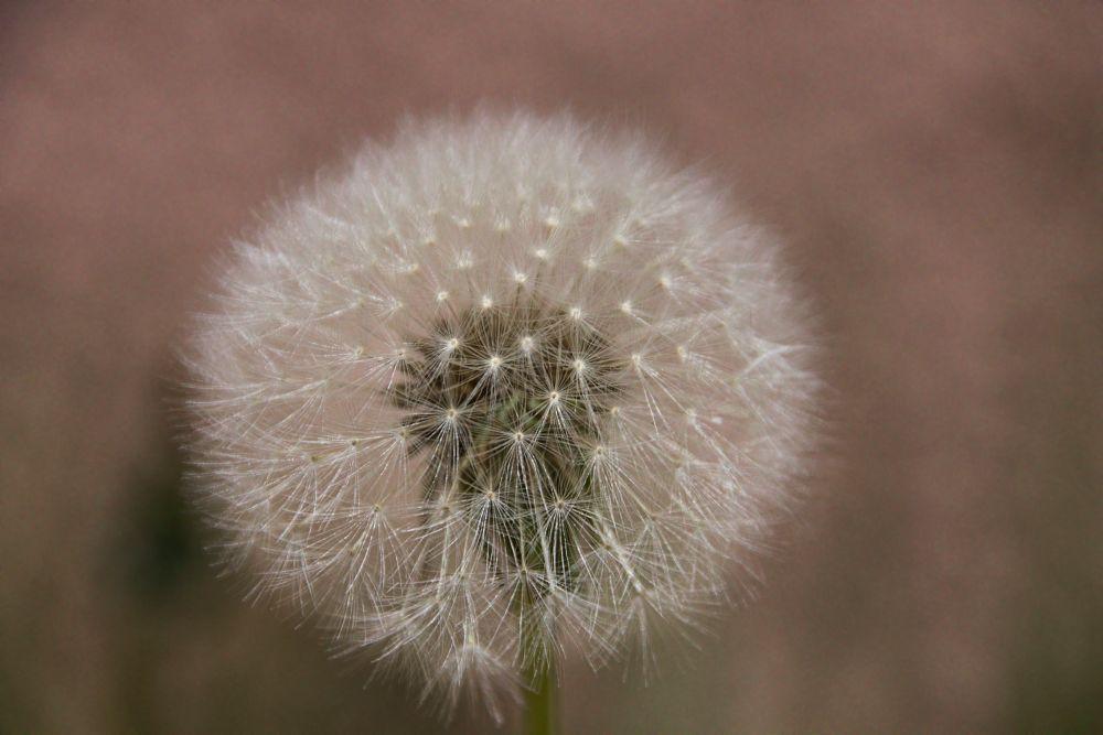 Photo in Nature #flowers #macro #nature