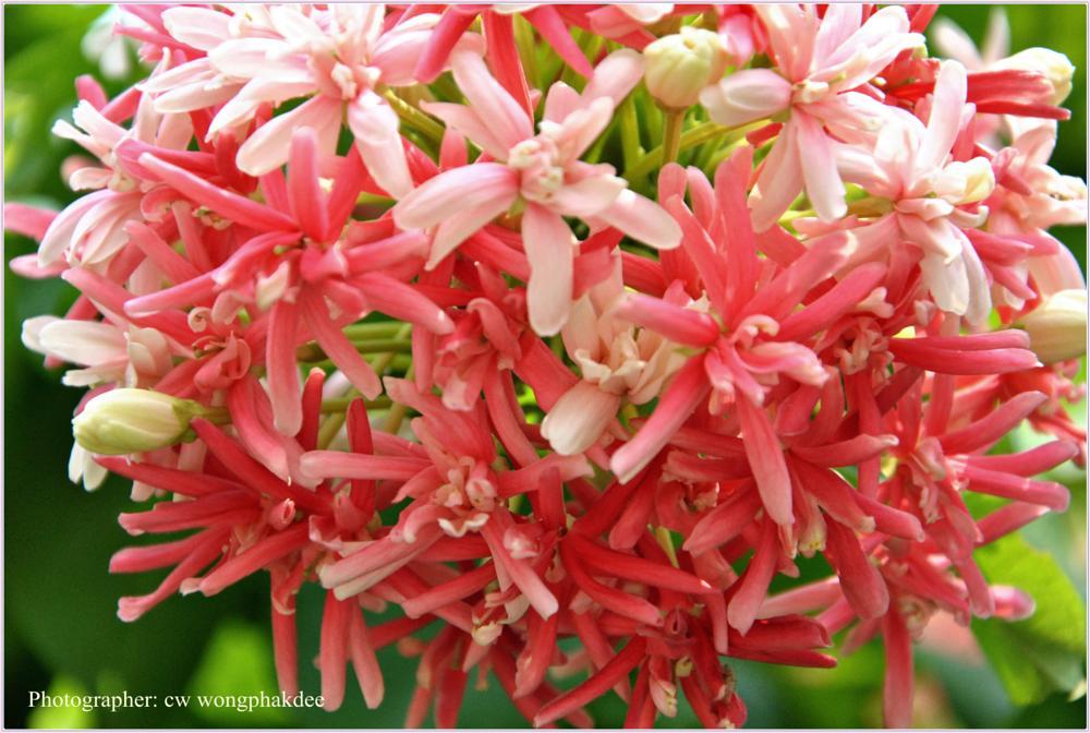 Photo in Nature #dokmai #flower #nature #macro #random