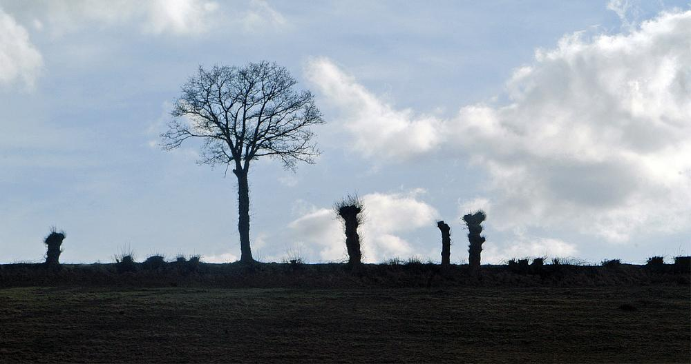 Photo in Landscape #landscape #rural #france #french #photographie #argentan #life #nature #natural #climate #winter #weather #photography