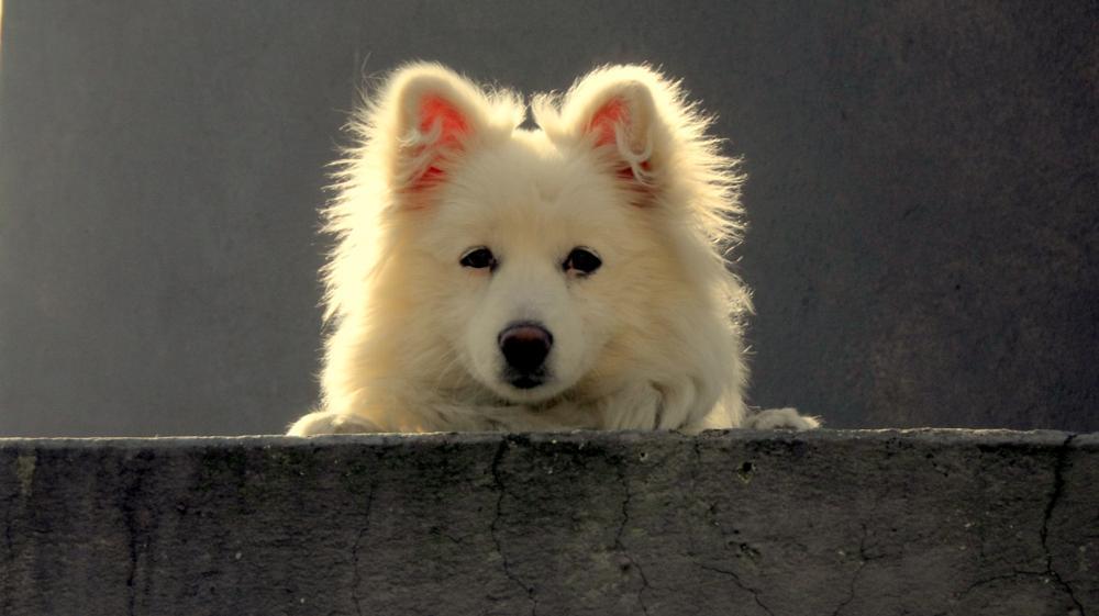 Photo in Animal #dogwatch #animalfeeling