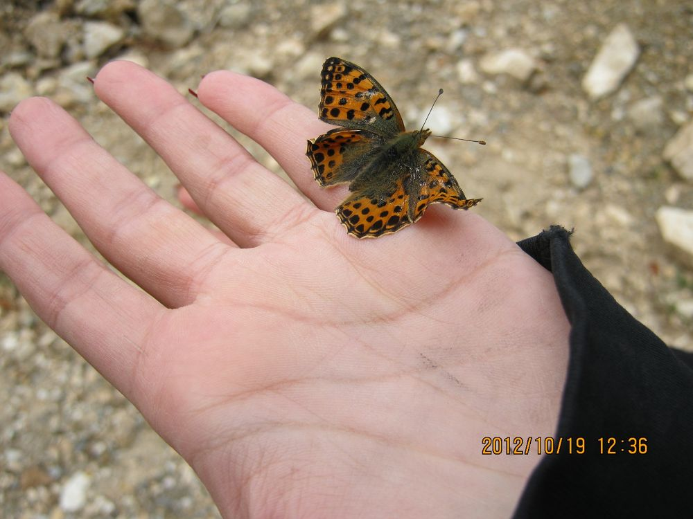 Photo in Random #insect #bug #butterfly #hand