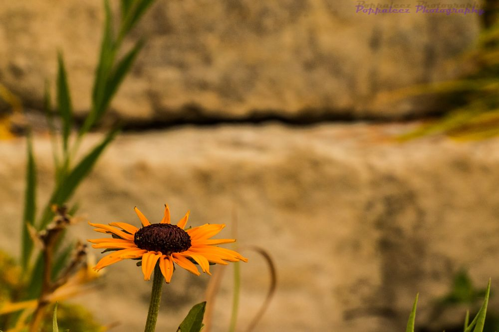 Photo in Nature #flower #sunny #orange