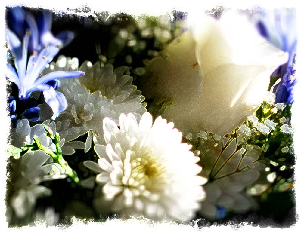 Photo in Macro #flowers #wedding #wedding flowers #love #gift #gift of love #hidden wonder #white and ble #white and blue #white and blue flowers