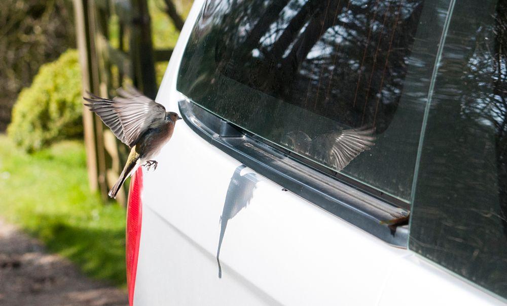 Photo in Animal #bird #in flight #springtime