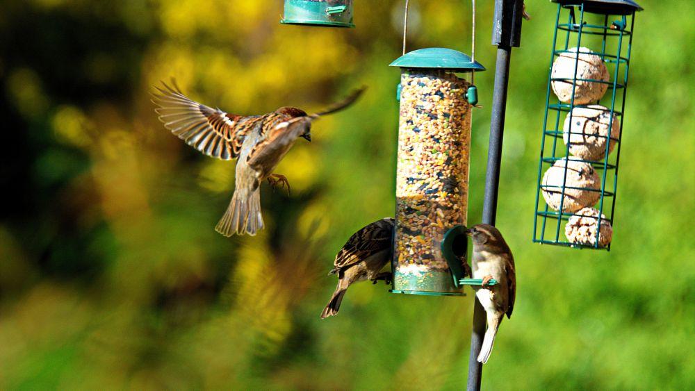 Photo in Nature #sparrow #feeder #food #nuts #garden