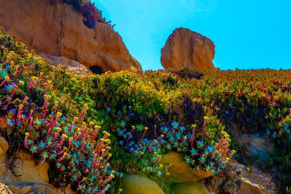 Photo in Nature #big sur #garrapata state park #california #california state park #natural flowers