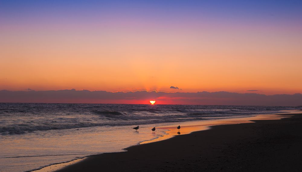 Photo in Landscape #sunset #seagull #seascape #sandybeach #blue sky