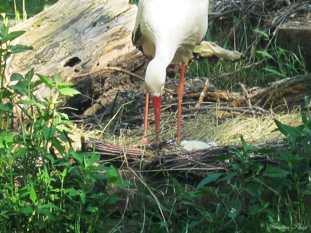 Photo in Nature #zoo #in budapest #storks #in magaret island