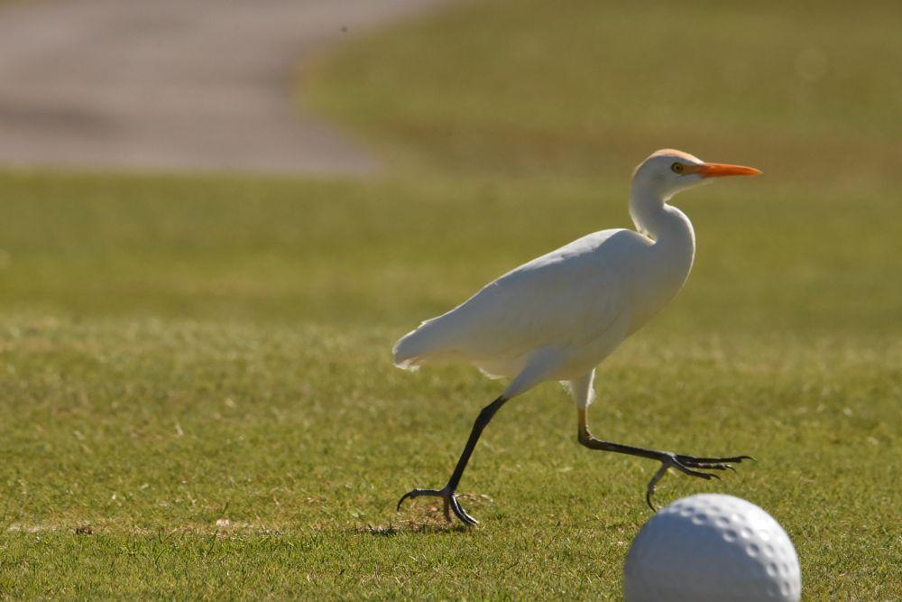 Photo in Nature #egret #bird #nature #wildlife