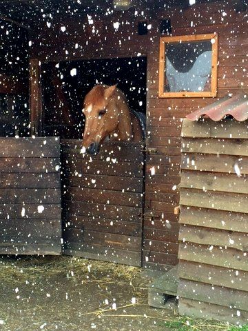 Photo in Animal #cheval #tête #flocons #box