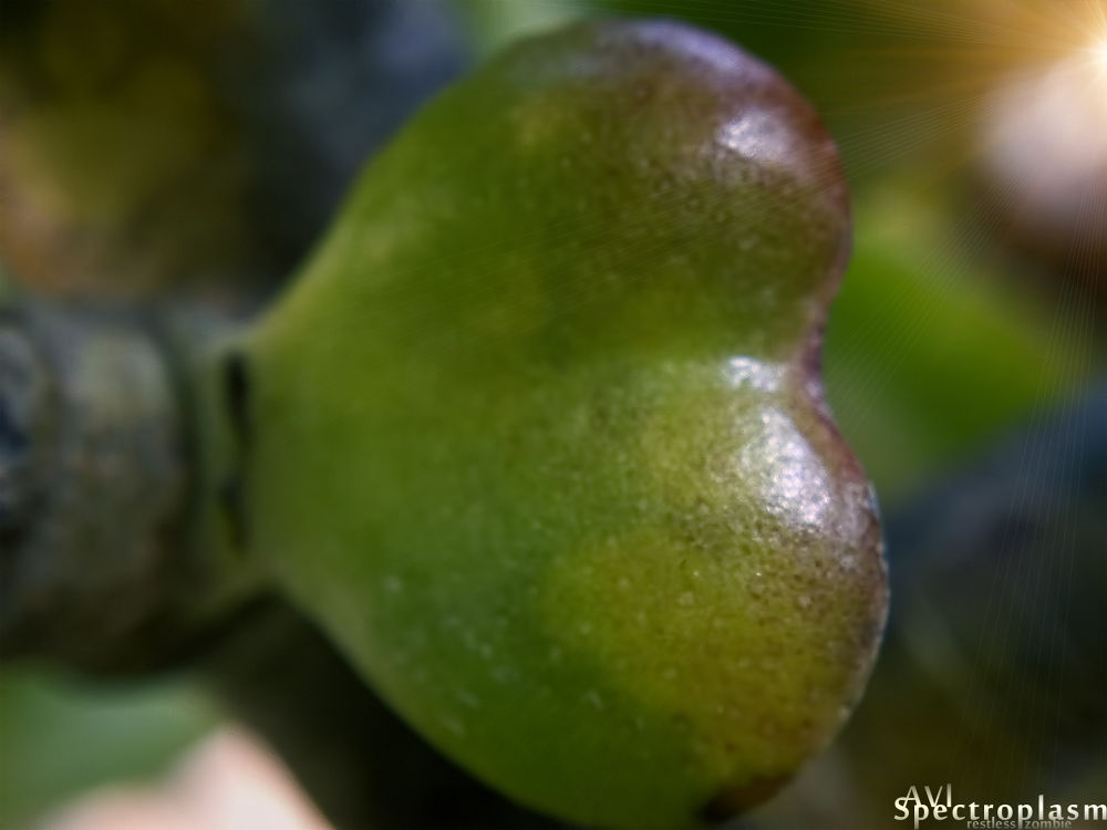 Photo in Macro #cactus #alo vera #leaf #bud #sibling #sprout #stem #close up