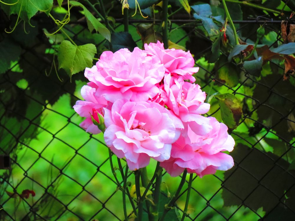 Photo in Nature #pink beauty
