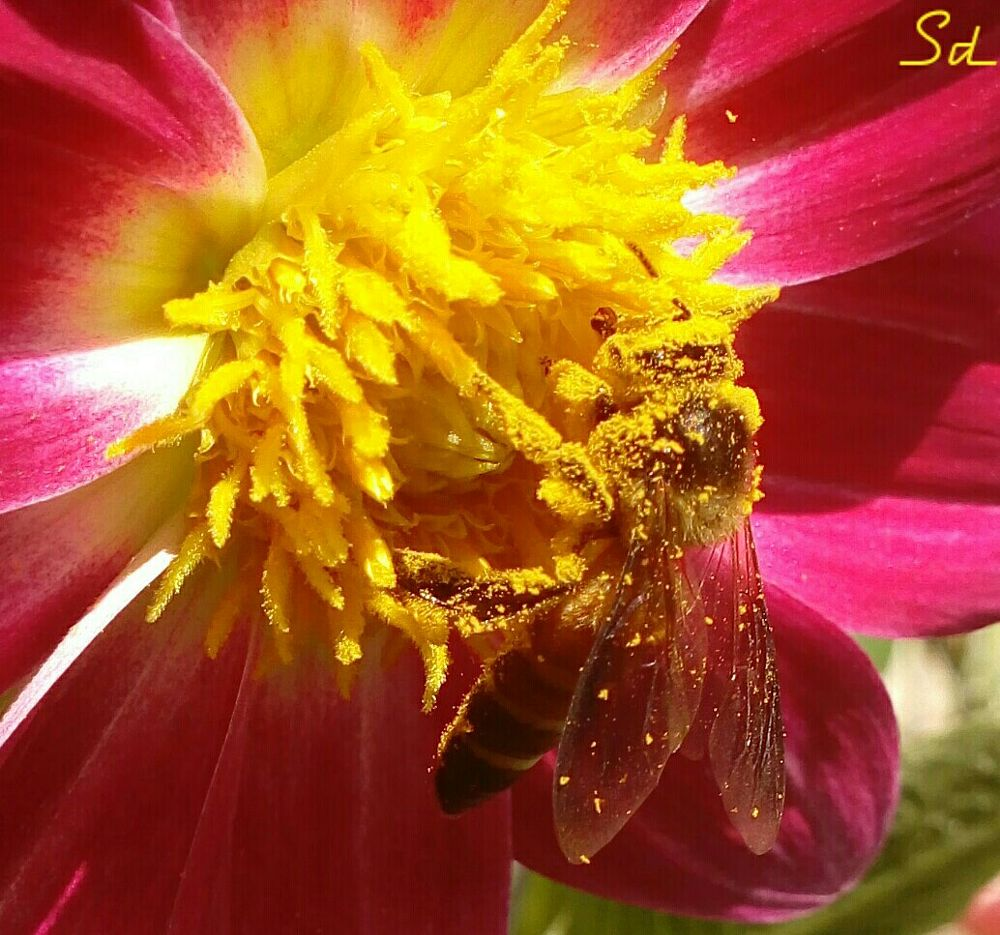 Photo in Random #bee #honey_bee #nature #insects