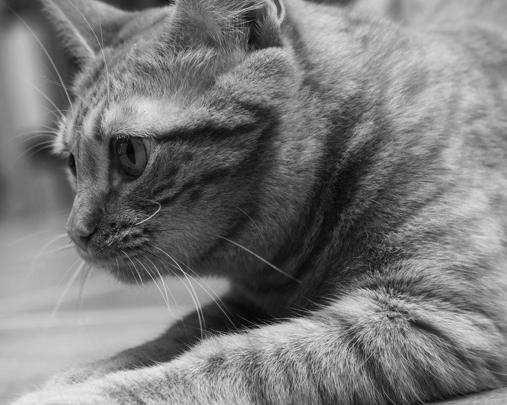 Photo in Animal #mel #cat #cats #gatos