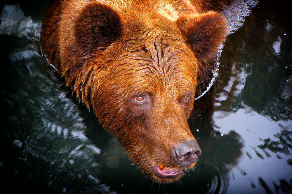 Photo in Nature #lion #animal #nature #bear #tiger #monkey #wildlife #giraffe #crocodile #animals #portraits #wildlife portraits