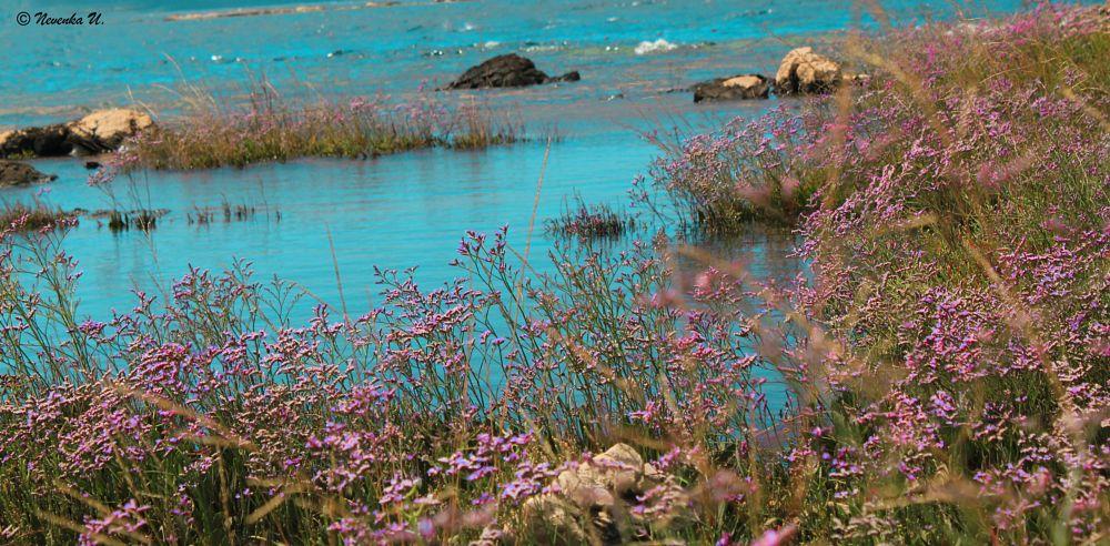 Photo in Landscape #sea #flowers #sea garden