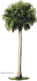 Photo in Industrial #palm tree #sabal palm