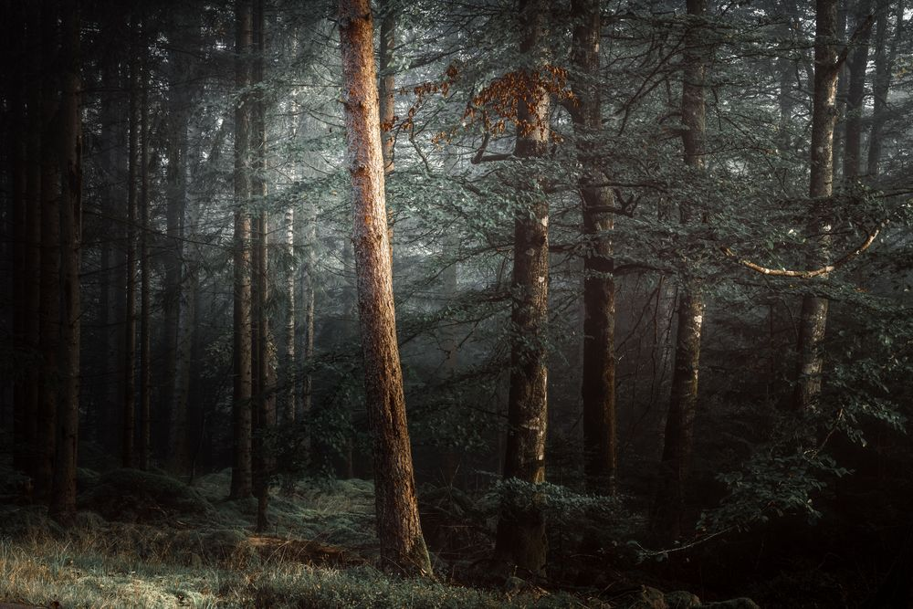 Photo in Nature #landscape #nature #trees #forest #sunrise #woodland #sweden #småland #europe #nikon sweden #moody #moody photography #light #magical #moss #nature photography #nikon