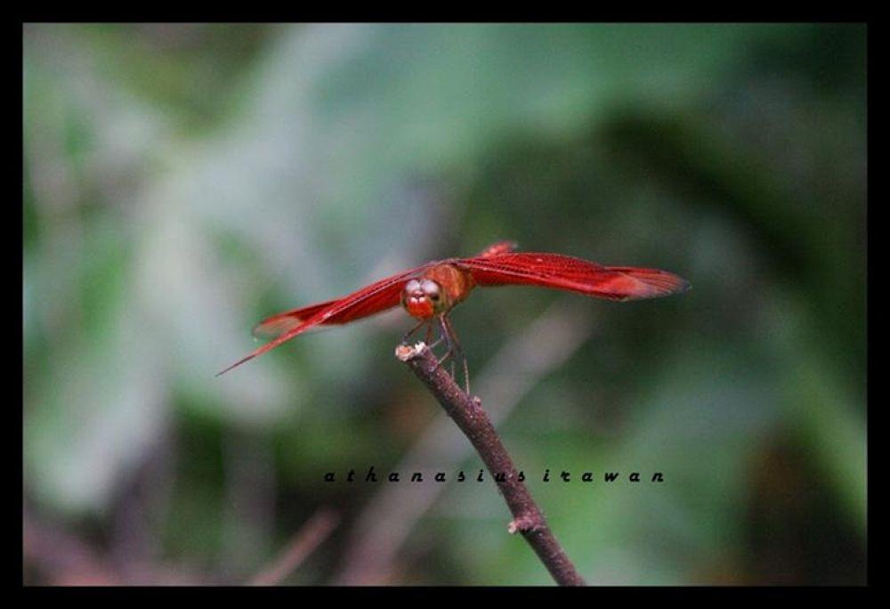 Photo in Random #dragonfly